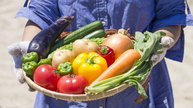 シェア畑が高い?都区内公共の貸し農園の料金相場&サービスの比較!