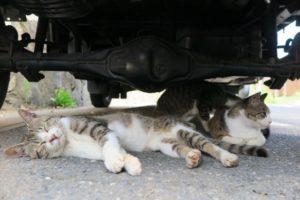 野良猫の簡単マーキング・トイレ防止対策!車やバイク編