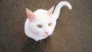 野良猫のマーキング防止対策!車や庭をトイレにさせないための方法